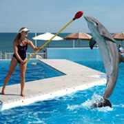Cabo Dolphin Trainer For A Day