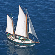 Cabo Sail and Snorkel Cruise