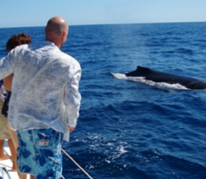 Cabo Sailing Snorkel and Whale Watching