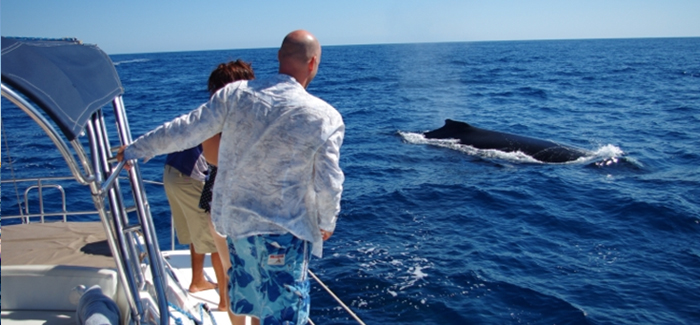 Cabo Sailing Snorkeling and Whale Watching