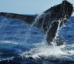 Zodiac Whale Watch Expedition