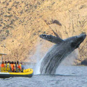 Ocean Riders Whale Watching Tour