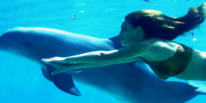 Dolphin Kids Encounter image 2