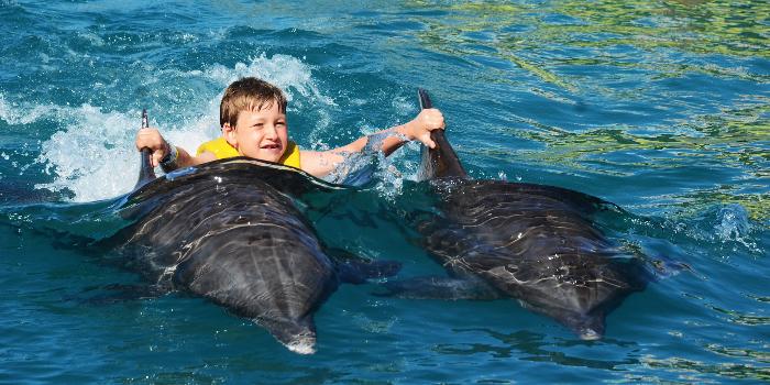 Vallarta Dolphin Swim Experience