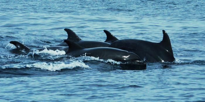 Wild Dolphins & Snorkel Combo