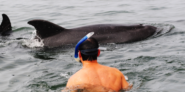 Wild Dolphins & Snorkel Combo