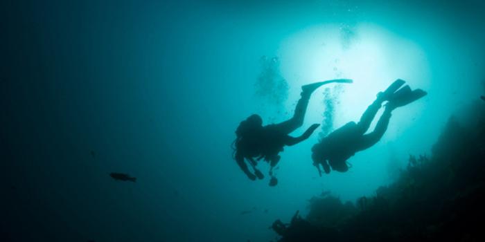 Los Arcos Night Dive Adventure