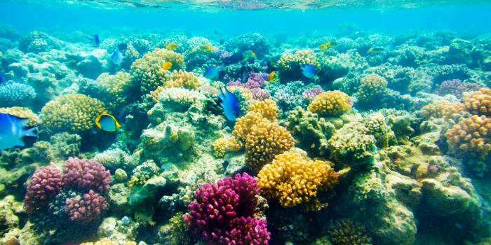 Marietas Islands Sailing & Snorkeling
