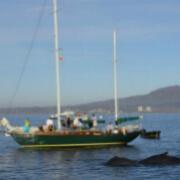 Pegaso Whale Watch Sailing Adventure