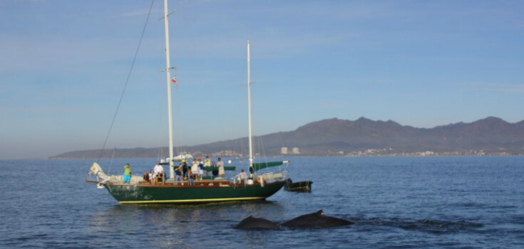Pegaso Whale Watch Sailing Adventure
