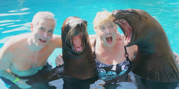 Vallarta Sea Lion Encounter