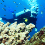 Vallarta Padi Open Water Certification Adventure