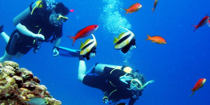 Vallarta PADI Open Water Certification Adventure
