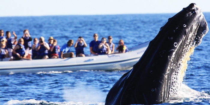 Whale Photo Safari Adventure