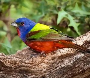 Birds of Tropical Paradise & Botanical Gardens