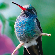 San Sebastian Western Birds & Culture