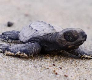 Sea Turtle Camp and Crocodile Adventure