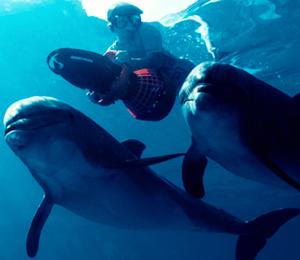 Dolphin Extreme Swim