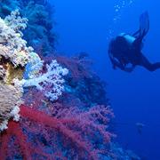 Bahama Divers Two Tank Morning Dive