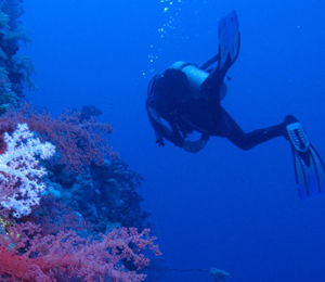 Nassau scuba diving trips - Best dive trips ...