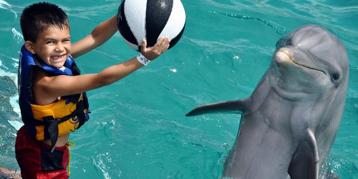 Royal Garrafon & Royal Dolphin Swim image 2