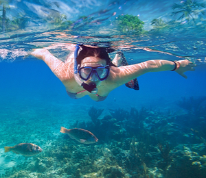 Sensational Snorkeling Sea Safari