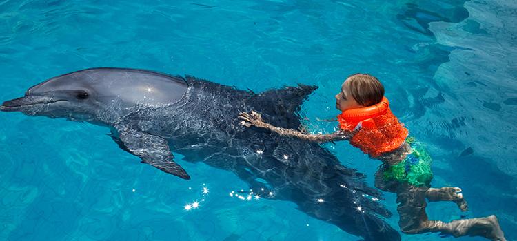 Royal Dolphin Swim image 4