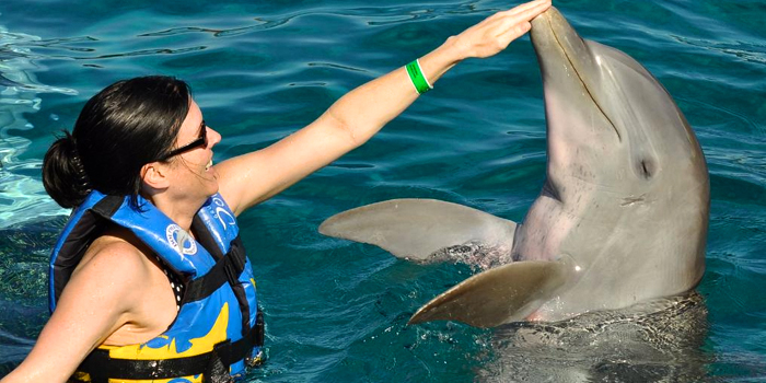 Royal Dolphin Swim image 5