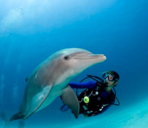 Dive with the Dolphins in Freeport