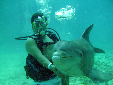 Dive with the Dolphins
