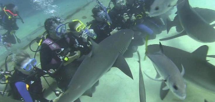 UNEXSO Shark Dive