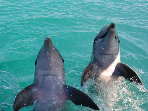 UNEXSO Dolphin Close Encounter in Freeport