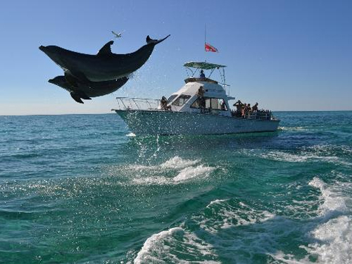 UNEXSO Open Ocean Dolphin Experience