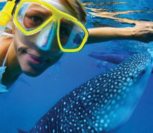 Whale Shark Encounter & Snorkel