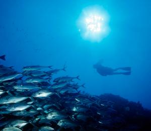 2 Bay Snorkel Adventure