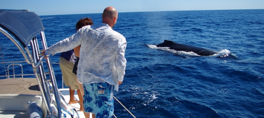 Private sailing and whale watching cruise for San diego private fishing charters