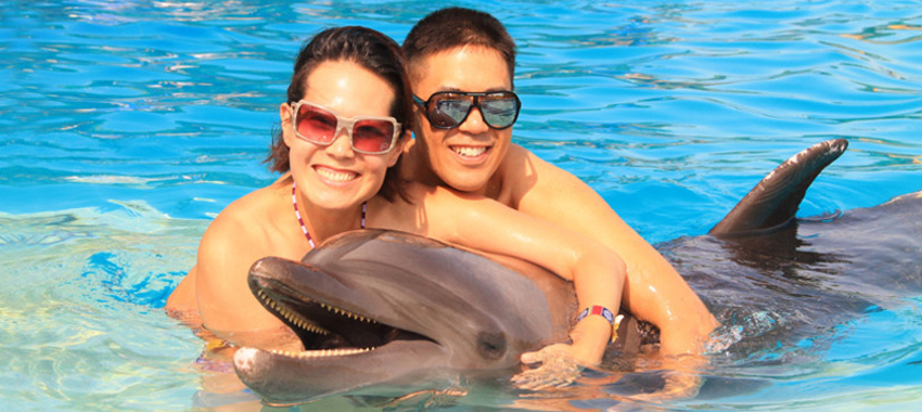 Private Dolphin Swim for Couples image 1