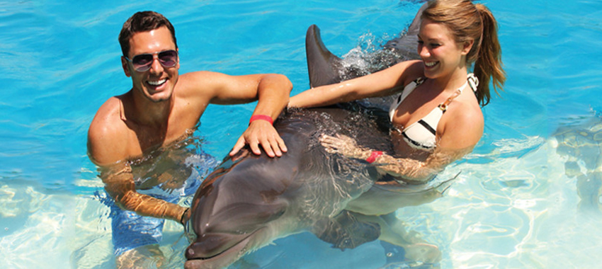 Private Dolphin Swim for Couples image 3